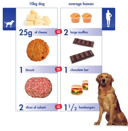 treat_translator_dog